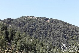 Al Barouk: The Cedar Reserve and its Surroundings